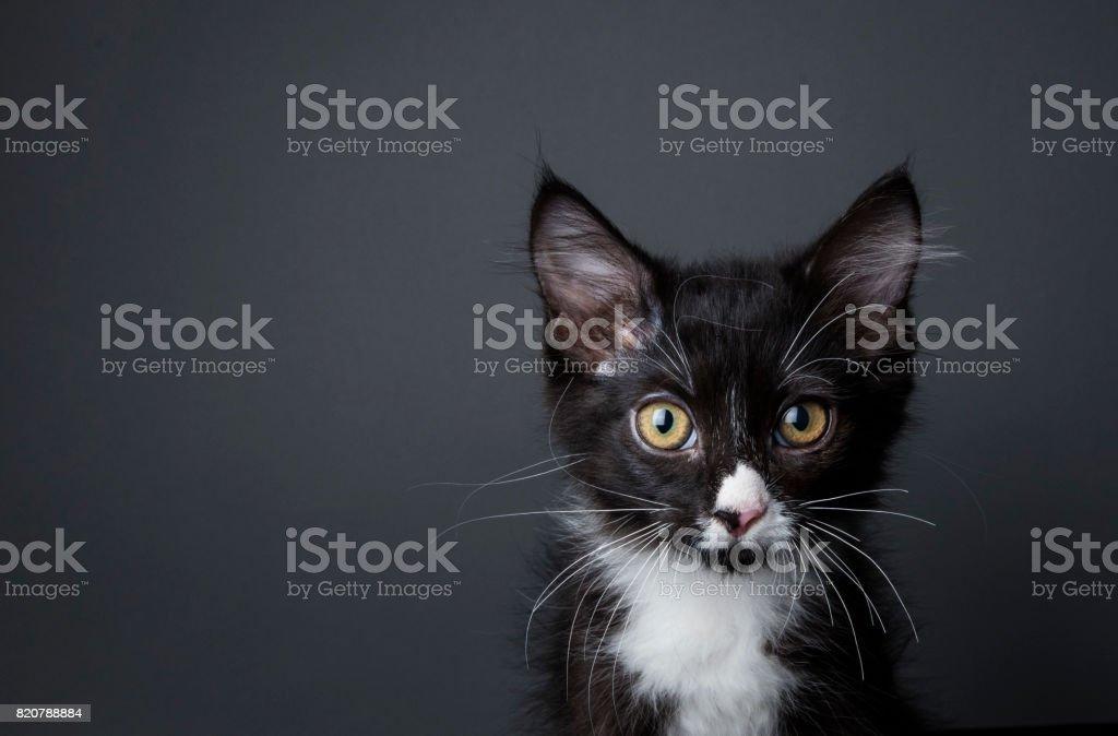 Adorable Kitten - The Amanda Collection stock photo