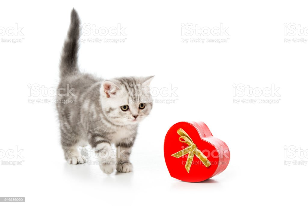 adorable kitten with heart shaped gift isolated on white stock photo