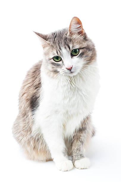 Adorable kitty picture id92207231?b=1&k=6&m=92207231&s=612x612&w=0&h=q8c2nzobkv0zhzvcau6d6hdobmtj7kthsdua3osqjha=
