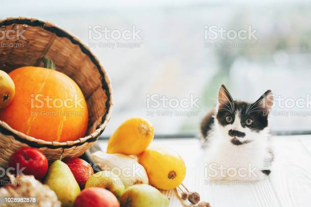 Adorable kitty sitting at pumpkin zucchini apples and pears in straw picture id1028982878?b=1&k=6&m=1028982878&s=612x612&h= acdlba qyiaj1c25au82kfx4tppeaetcudmvcfplho=