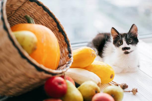 Adorable kitty sitting at pumpkin zucchini apples and pears in straw picture id1028983016?b=1&k=6&m=1028983016&s=612x612&w=0&h=j7q1hnriq8cc90lnvik3vzybdjejvhh64k8hrdpdkuo=