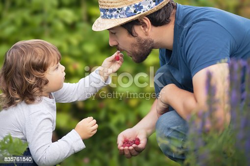 Cute toddler kid eating berry with her father, summer day, raspberry harvest. Lifestyle, family leisure time, father and child. Family farm, countryside