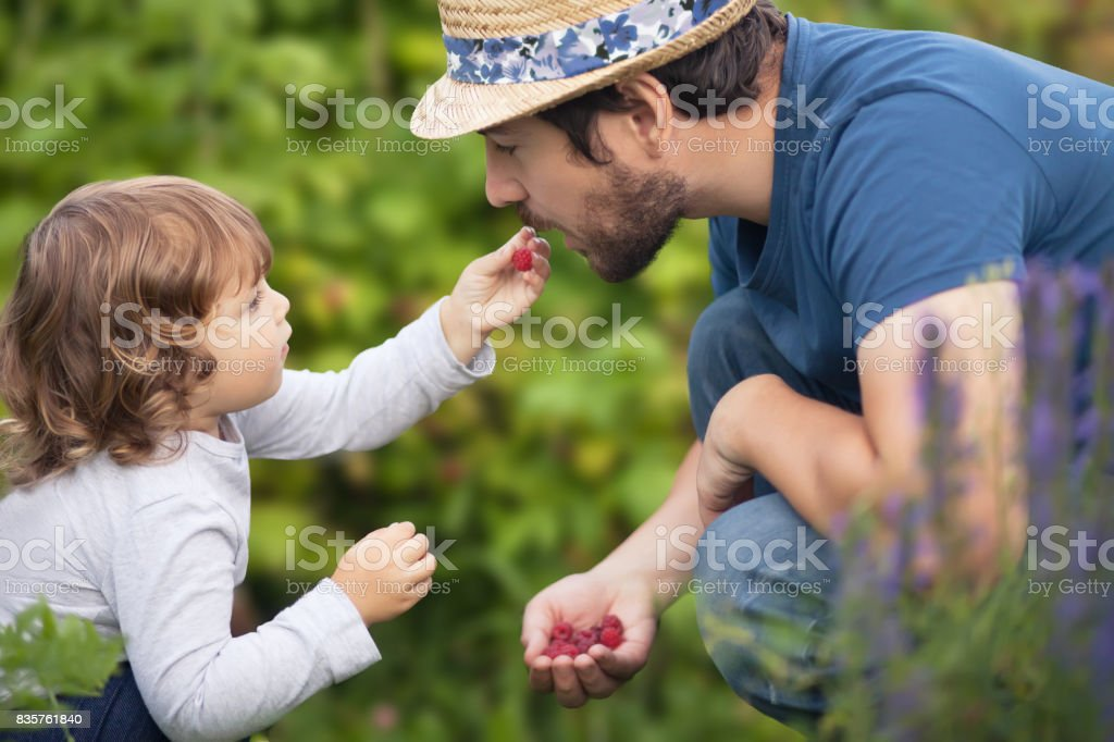 Adorable little baby girl and her father eating raspberries stock photo