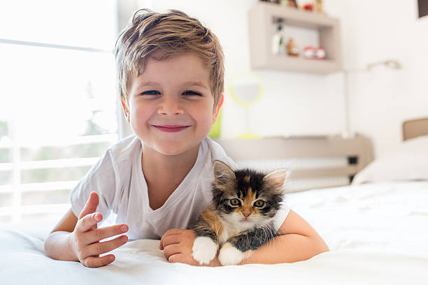 Adorable little boy and his kitten! - foto de acervo