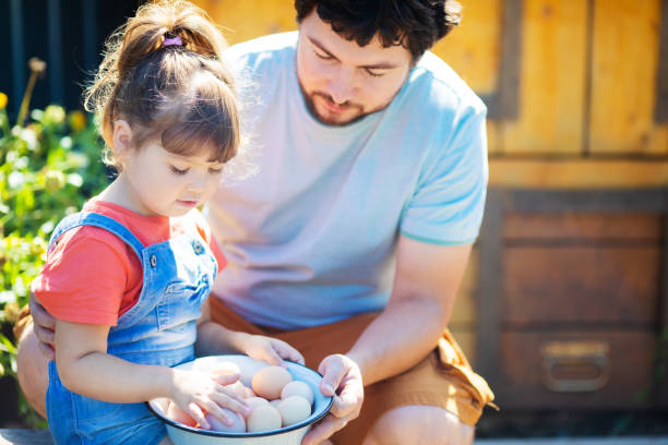 Adorable little girl holding basket full of white and brown raw eggs, her father tells her about the use of the farm products stock photo