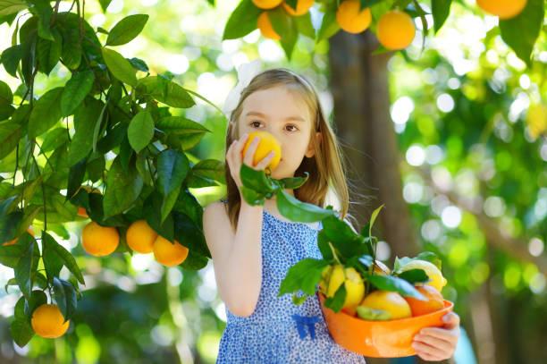 Entzückende kleine Mädchen Picking frische reife Orangen – Foto