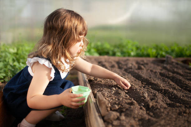 Adorable little girl planting seeds in the ground at the greenhouse stock photo