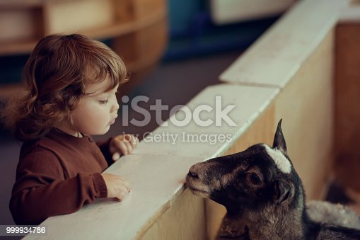 istock Adorable little girl watching the sheep at the petting zoo 999934786