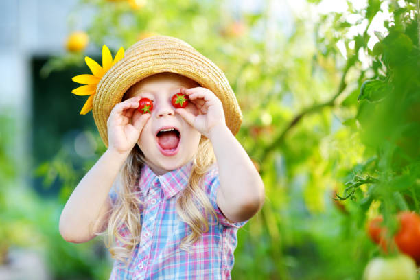 Adorable little girl wearing hat picking fresh ripe organic tomatoes in a greenhouse stock photo