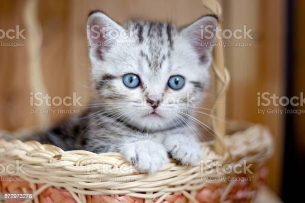 Adorable little kitten sitting in a wicker basket picture id872973276?b=1&k=6&m=872973276&s=612x612&h=uypirz0hnht3bq f43svc5 r17adjfhwgwpcj erary=