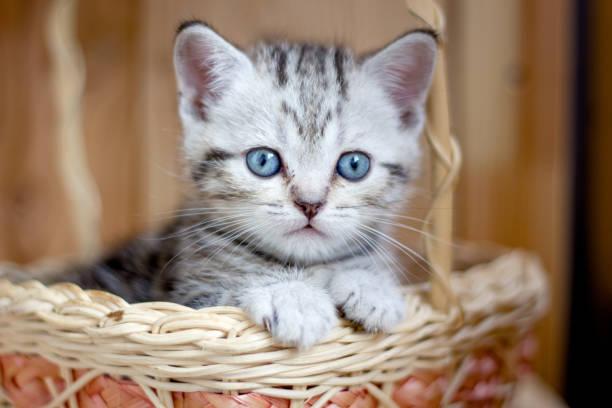 Adorable little kitten sitting in a wicker basket. stock photo