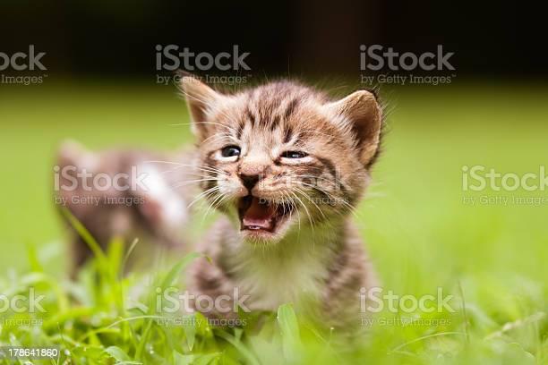 Adorable little kittens picture id178641860?b=1&k=6&m=178641860&s=612x612&h=yhqmrg5 zfk fblq45rvggr8lv8pqgkb7fvkkrujhcs=