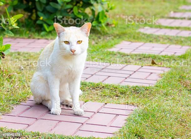 Adorable meowing tabby kitten outdoors picture id479545179?b=1&k=6&m=479545179&s=612x612&h=r1tl22f i0kbpxylghztqt2xgsqokda6dnohqvtq8ek=