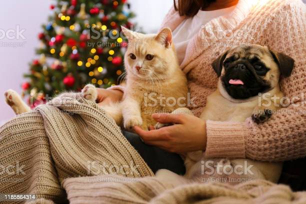 Adorable pet at home with winter holiday season decorations picture id1185864314?b=1&k=6&m=1185864314&s=612x612&h=xfhfjlo8s1vntbeorqthabdltekhge 02 jzlef3 hw=