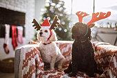 Adorable Pets Dressed As Reindeer