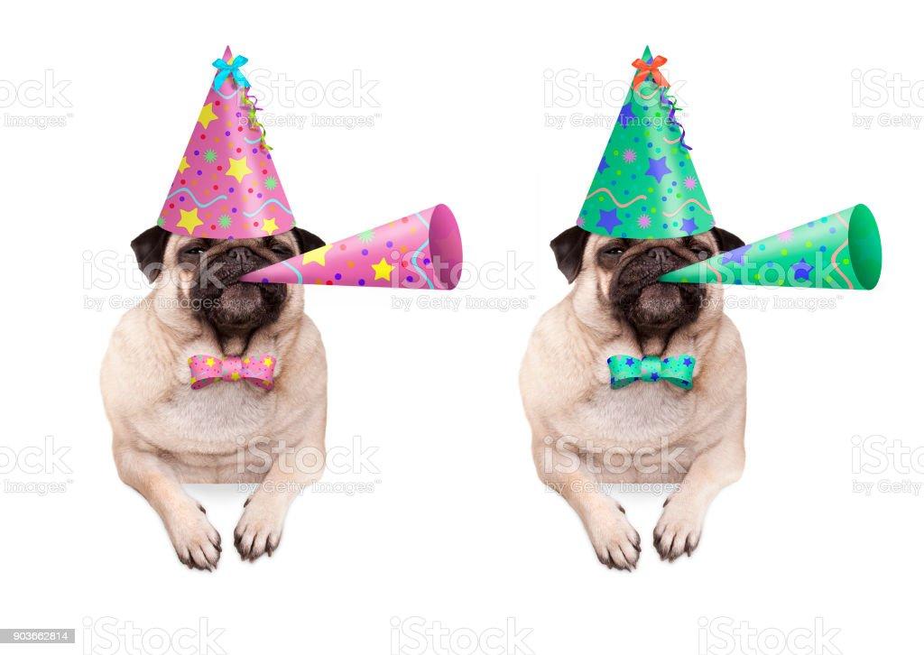 schattig pug puppy hondje opknoping met paws op lege banner, kleurrijke verjaardag feest hoed te dragen en hoorn blazen foto
