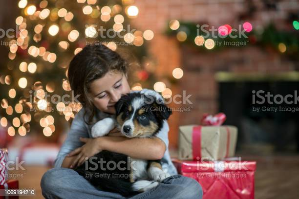 Adorable puppy for christmas picture id1069194210?b=1&k=6&m=1069194210&s=612x612&h=kfjqvtvzt6kuthdf bdssottyzmnorso2 wp oh7pxs=