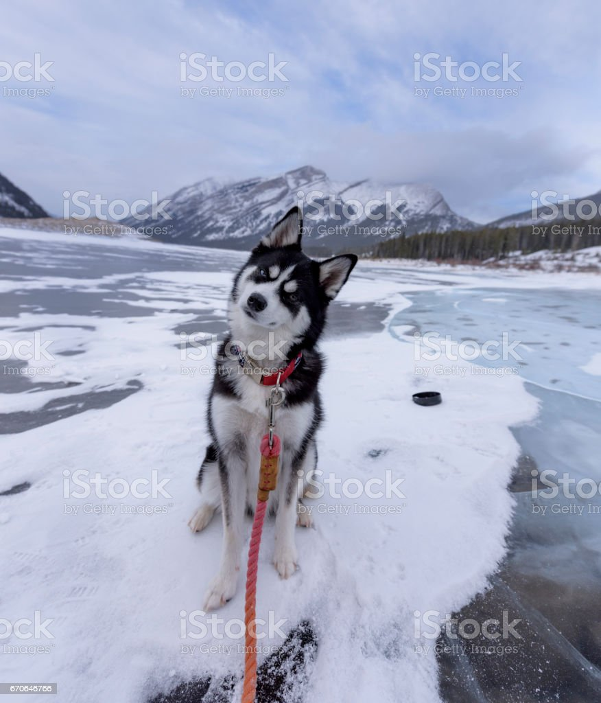 Adorable puppy sits on frozen lake in the Rockies stock photo