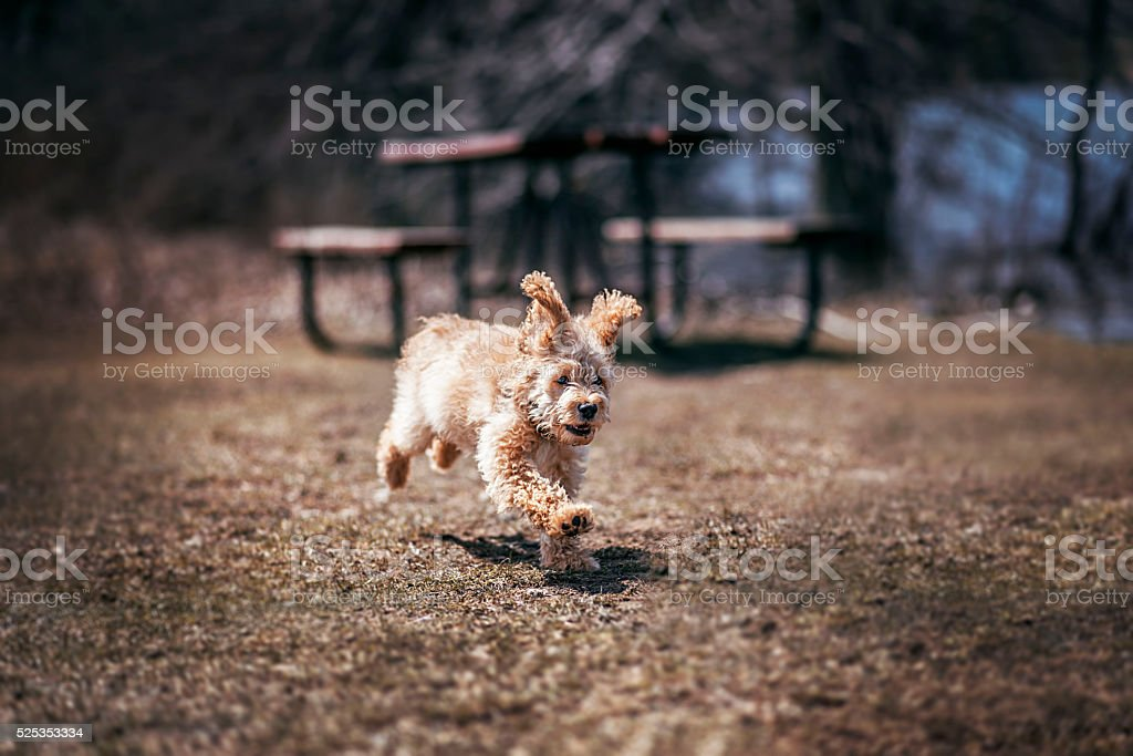 Adorable Puppy With Floppy Bunny Ears stock photo
