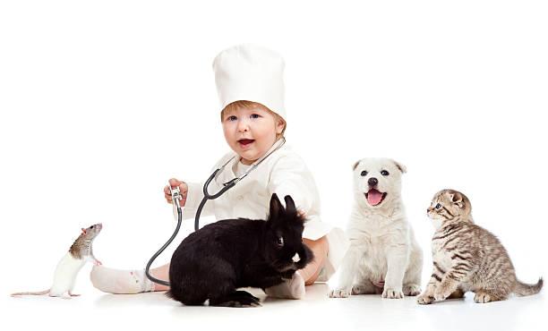 Adorable small kid doctor examining pets dog cat bunny rat picture id177427176?b=1&k=6&m=177427176&s=612x612&w=0&h=avrg7pxxfxsdevg0gejk0xgiq y67bjuqq7bcmo2mcm=
