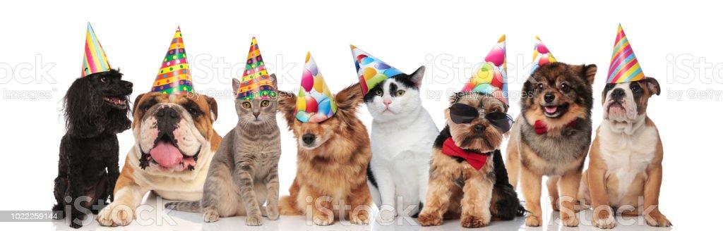 Entzückende Team Geburtstag Tiere Verschiedener Rassen Stockfoto Und
