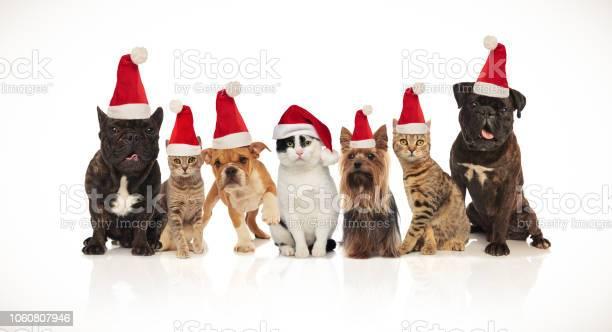 Adorable team of seven christmas pets of different breeds picture id1060807946?b=1&k=6&m=1060807946&s=612x612&h=s6u3peq5rzp5s58swp0us3bjuu0oaswpjqjyu nviok=