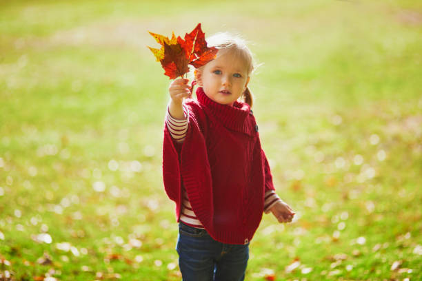 Adorable toddler girl playing in autumn park stock photo