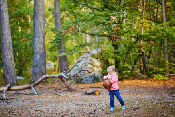 Adorable toddler girl with basket picking mushrooms in autumn forest stock photo