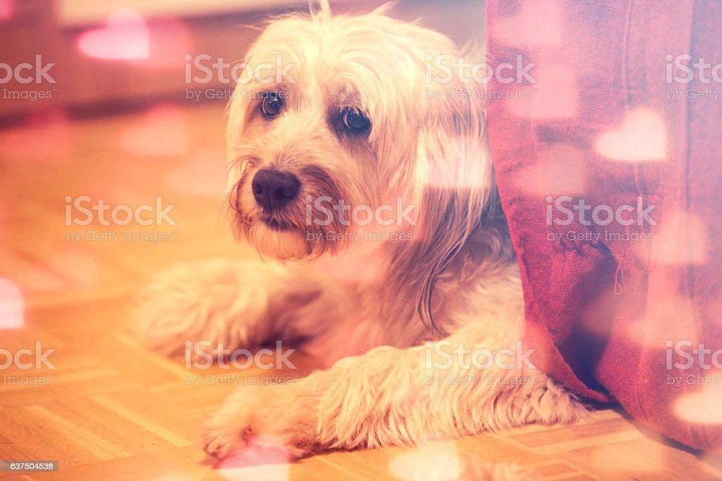 Adorable Valentine dog stock photo