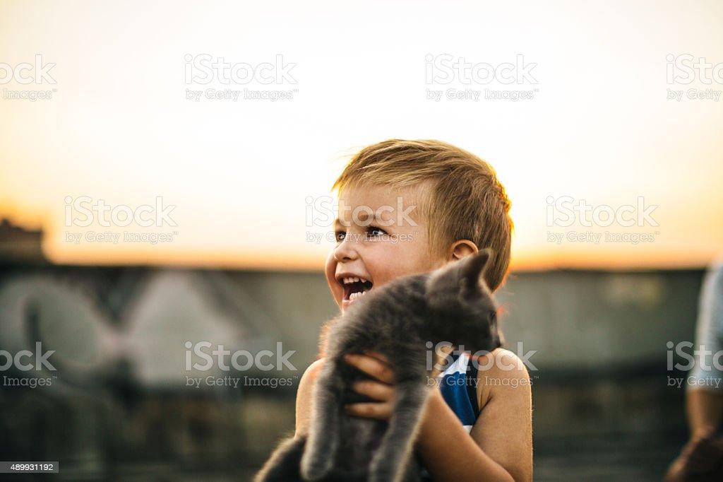 Little boy is meeting his new pet, little grey cat