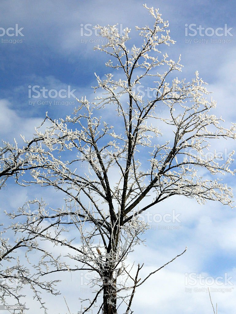 Adorned branches with tinsel stock photo