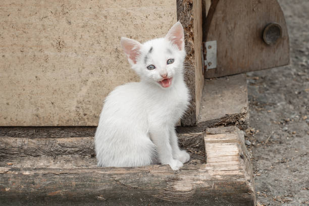Adoroble small kitten sits in front of her house picture id668296498?b=1&k=6&m=668296498&s=612x612&w=0&h=4fveqo8yjckzvikplu5pbwa9snshwjqzjxdwkoel1v8=