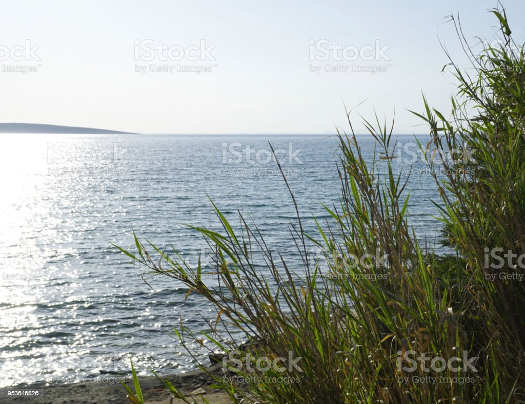 Adriatic sea coast in Croatia, Island of Pag. Big leaves and branches of reed Mediterranean plant Phragmites near the sea surface and blue sky with sun rays in the background stock photo