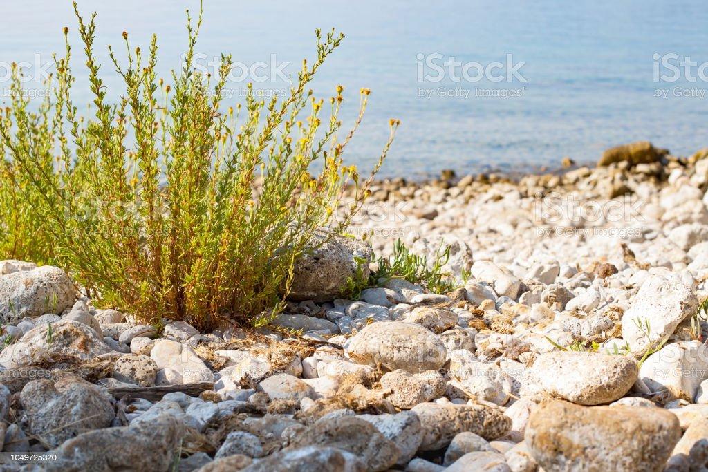 Adriatische Küste, Krk, Kroatien – Foto