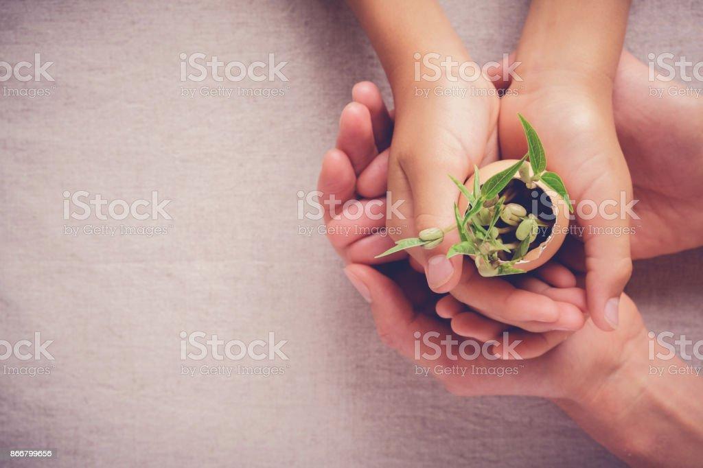 Erwachsene und Kinder Hände halten Setzling Pflanzen in Eierschalen, Eco Gartenarbeit, Montessori-Pädagogik, CSR Corperate social Responsibility-Konzepts – Foto
