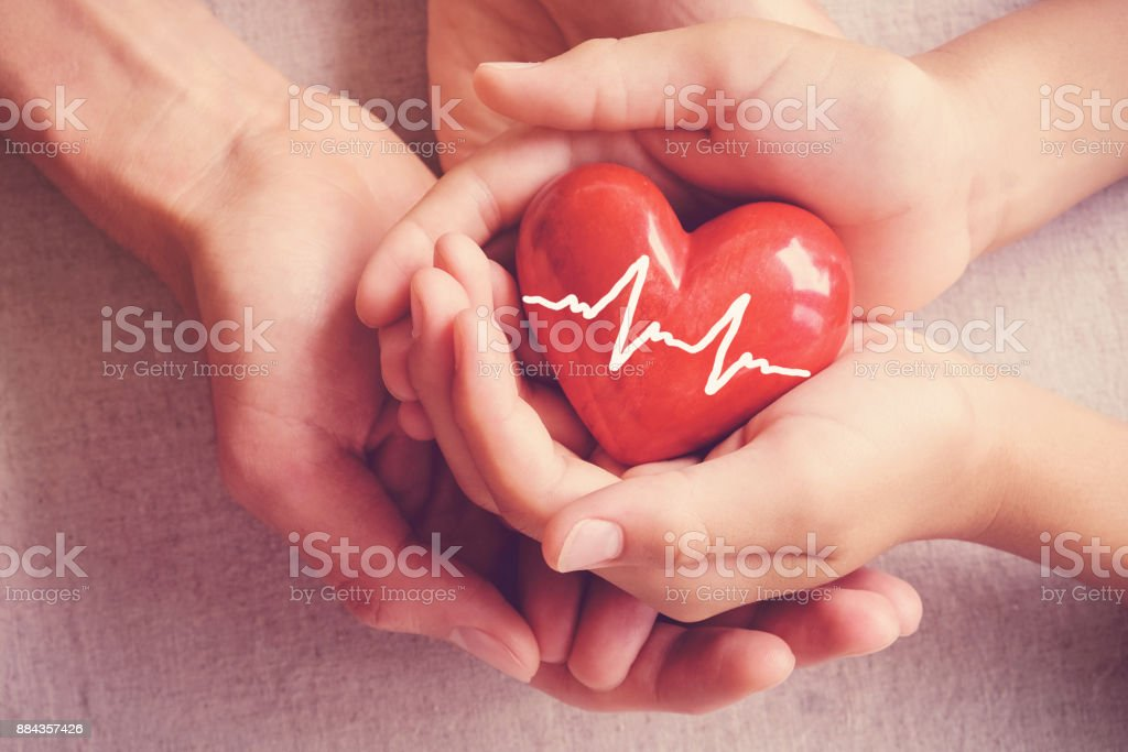 adult and child hands holiding red heart, adult and child hands holiding red heart, health care, organ donation, family insurance concept stock photo