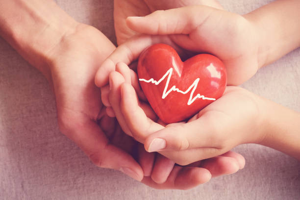 adult and child hands holiding red heart, adult and child hands holiding red heart, health care, organ donation, family insurance concept - heart internal organ stock photos and pictures