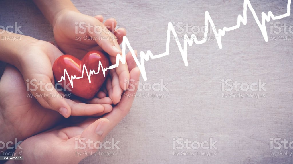 adult and child hands holiding red heart with cardiogram, health care love and family concept stock photo