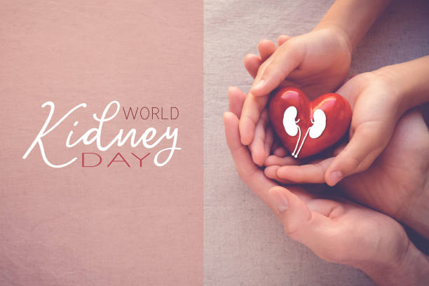 adult and child hands holiding red heart, World Kidney Day stock photo