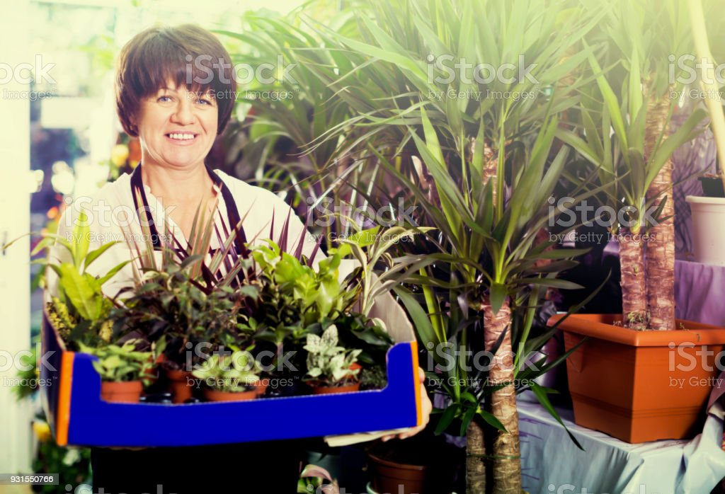 Adult assistant tending numerous green plants stock photo