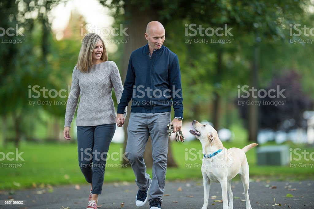 Adult couple walking their dog in the park at sunset stock photo