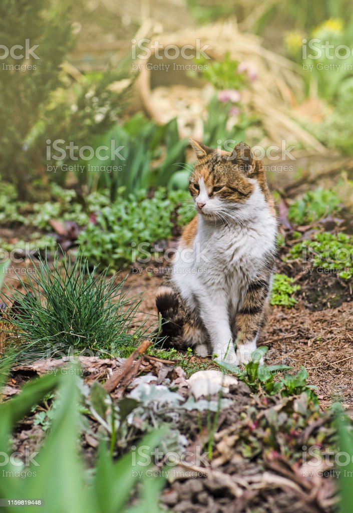Cat sits in the garden of green lawn. Cat laying in nature. Cat sits...