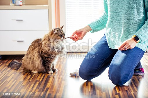 Adult Female Pet Owner Feeding Her Siberian Cat.