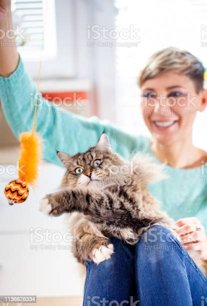 Adult female pet owner playing with her siberian cat with cat feather picture id1136626334?b=1&k=6&m=1136626334&s=612x612&h=s7qbuwkgvlgnthv8nuwya zab0qqfclgpucqclow3lm=
