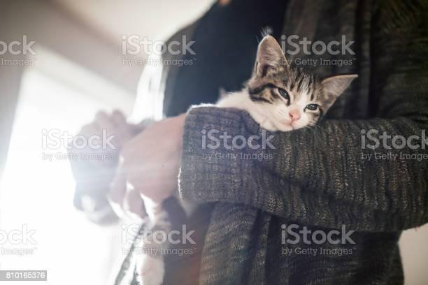 Adult holding kitten picture id810165376?b=1&k=6&m=810165376&s=612x612&h=jyz7ondaut2lwhnlf2hnf3q9u xg b9rlon5ws4ebxs=