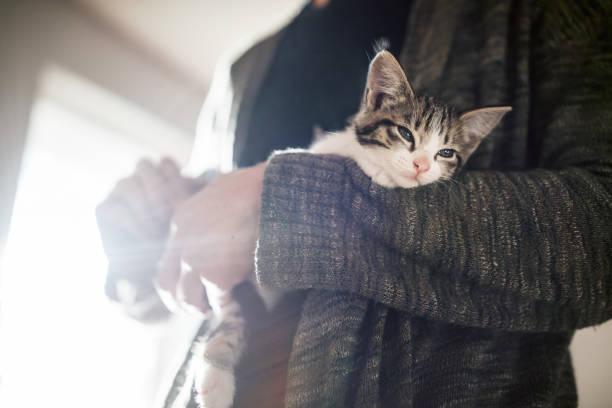 Adult holding kitten picture id810165376?b=1&k=6&m=810165376&s=612x612&w=0&h=fsof01lhuh 6fxuk08430pwxk4lcsbcslojpeyka6sw=