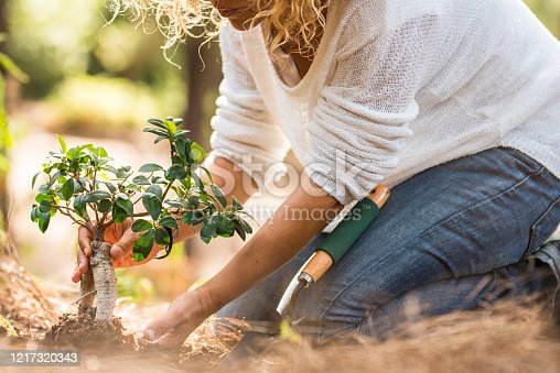 Adult lady plant a new tree on the ground in the forest - no deforestation and save planet concept - environment and gardening work for people who love nature and world