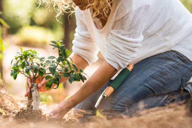 Adult lady plant a new tree on the ground in the forest - no deforestation and save planet concept - environment and gardening work for people who love nature and world stock photo