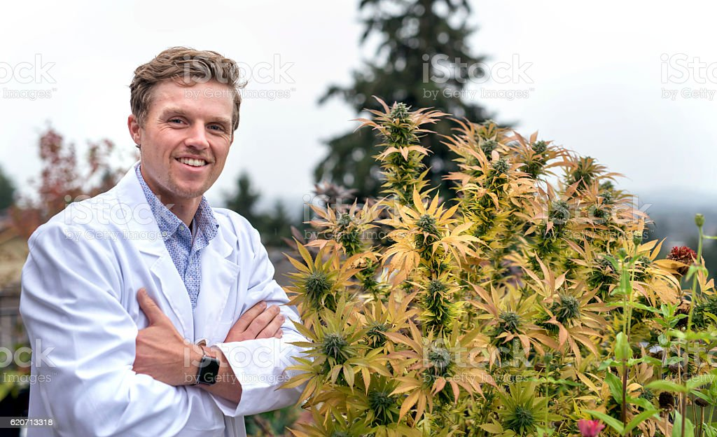 Adult male physician standing next to cannabis plant stock photo