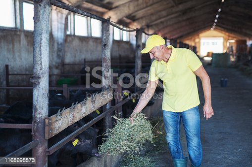 Adult man farmer working in barn, feeding animals with hay.